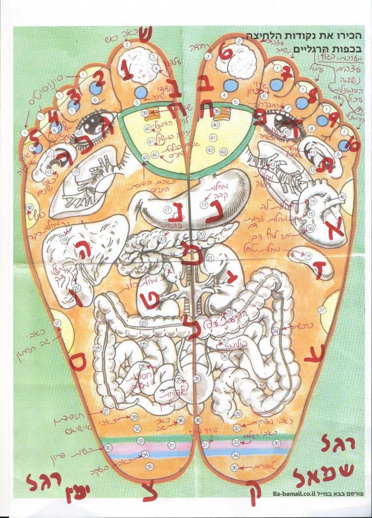 לימודי רפלקסולוגיה